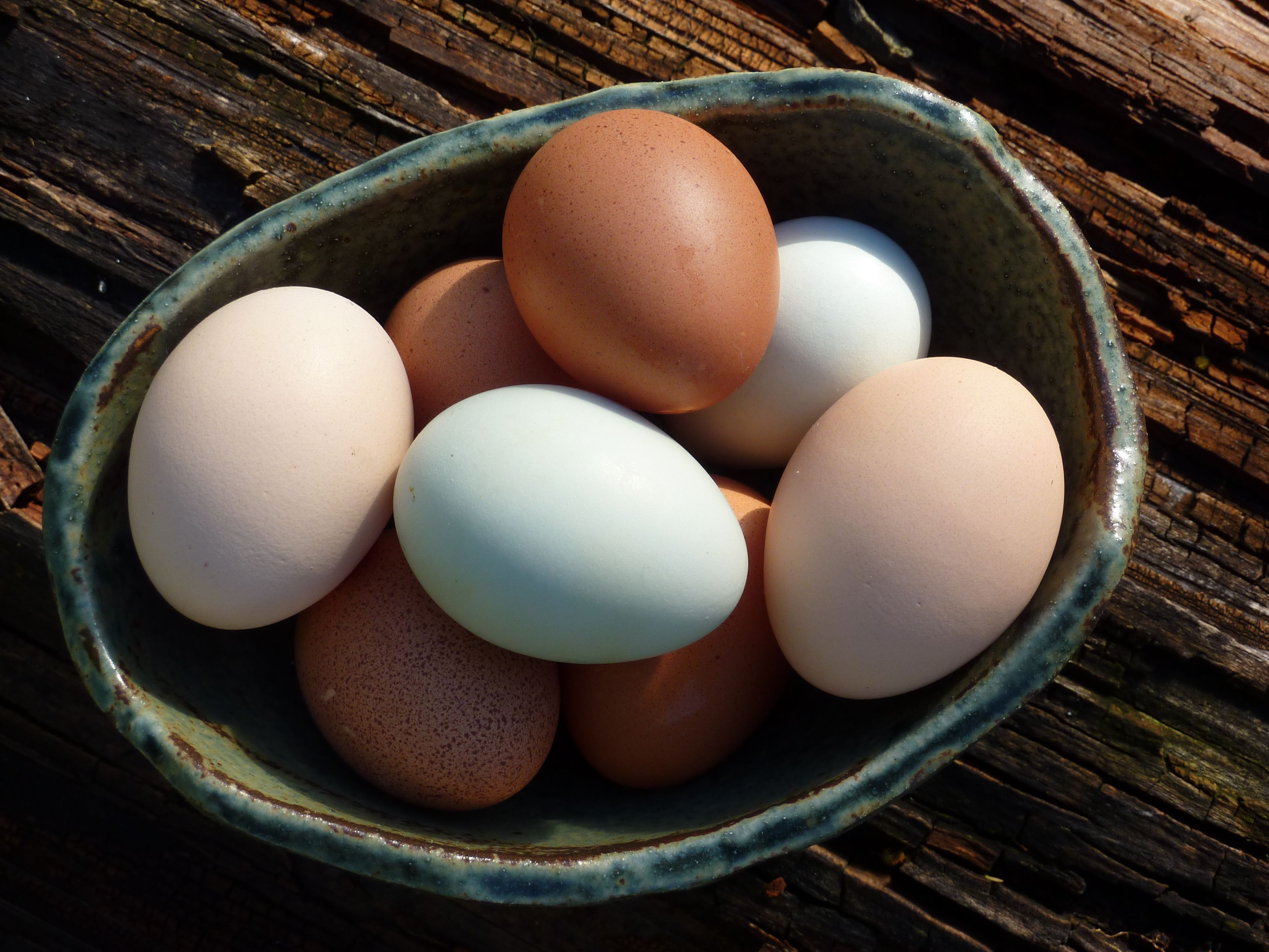 Eggs from our chooks