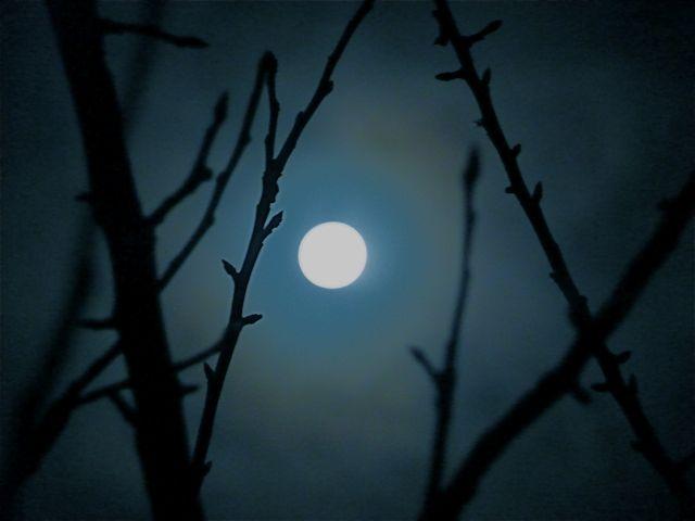 Moon through the apple tree